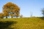 Tree and grassland