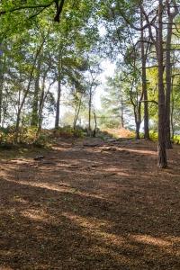 Addington Hills - woodland